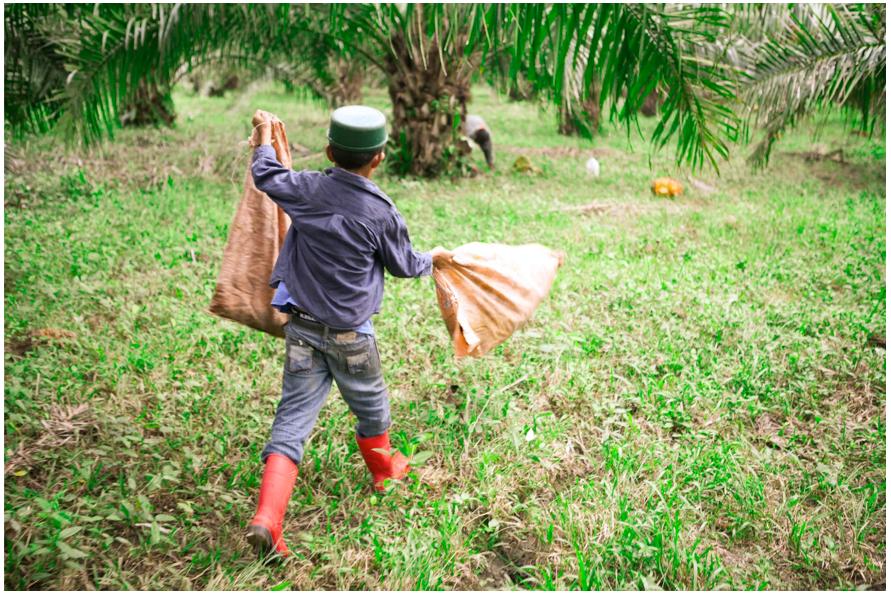"""Niño de la """"Guadalupe Carney"""" trabajando en la cosecha de palma africana. Colón, Honduras."""