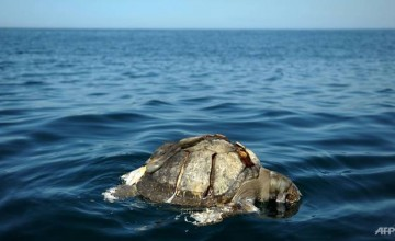 the-discovery-of-dead-sea-turtles-in-november-2017-recalled-a-similar-find-in-2013-between-september-and-october-when-hundreds-of-sea-turtles-were-found-dead-off-el-salvador-s-coast-1509669286296-2