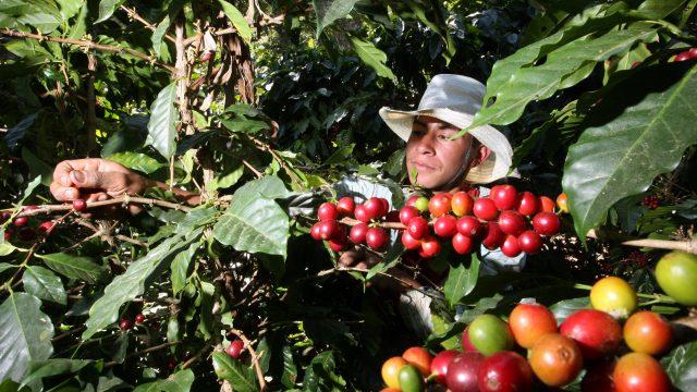 http://elpulso.hn/wp-content/uploads/2020/01/cafe-exportado-640x360.jpg