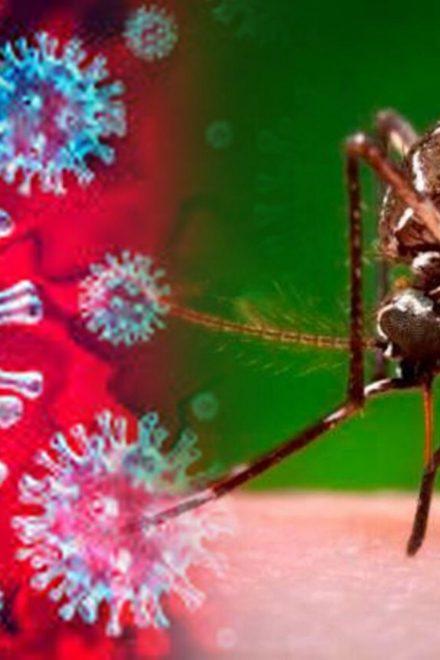 Casos de dengue y coronavirus siguen en aumento en Honduras