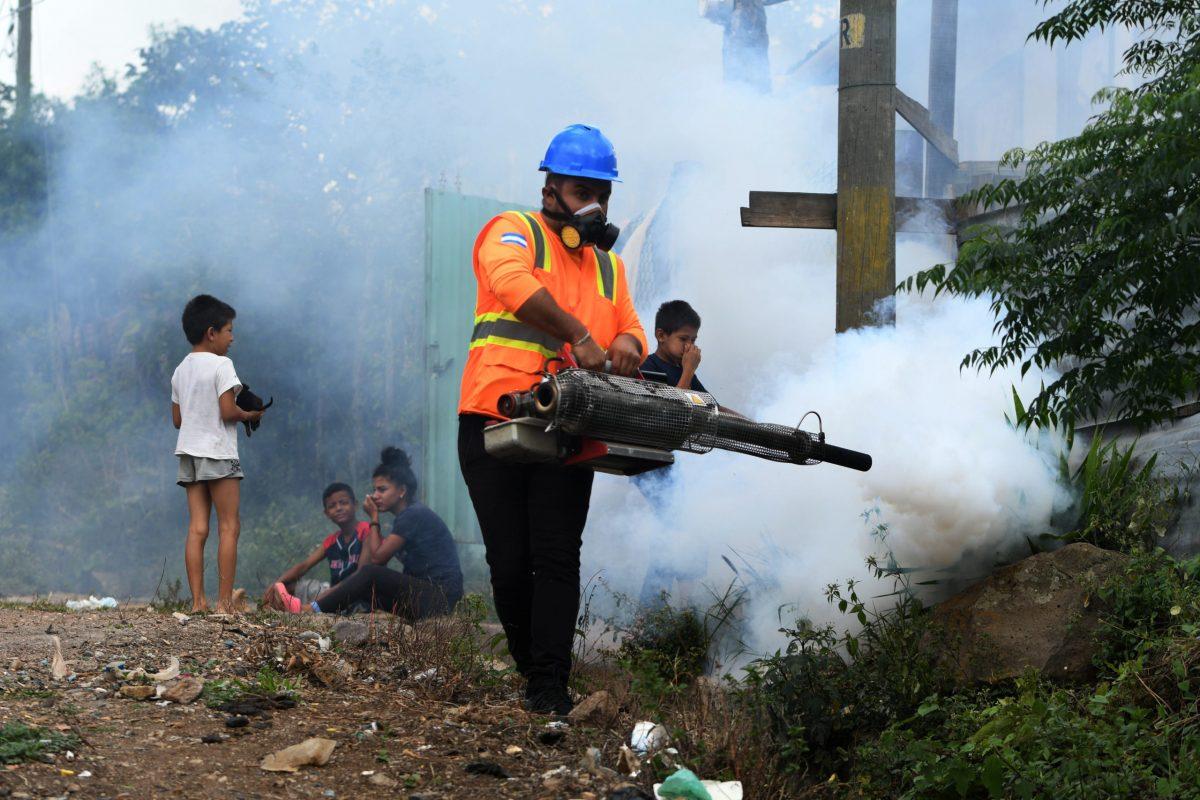 Más de ocho mil casos en 2021: crisis por dengue recrudece en Honduras