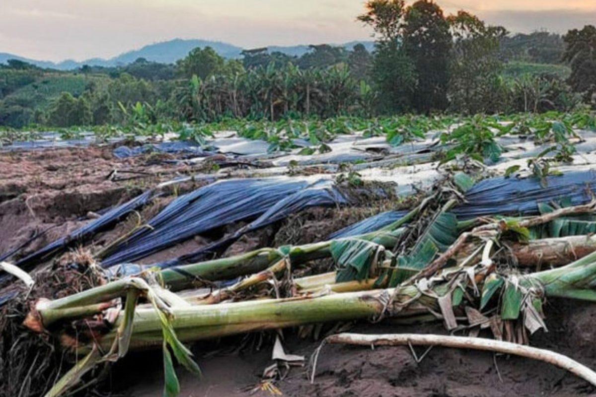 Eta e Iota devastaron producción agrícola pero se garantiza abastecimiento