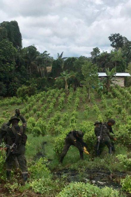 """EE.UU. necesita enfoque """"más inteligente"""" en lucha contra las drogas en Latinoamérica"""