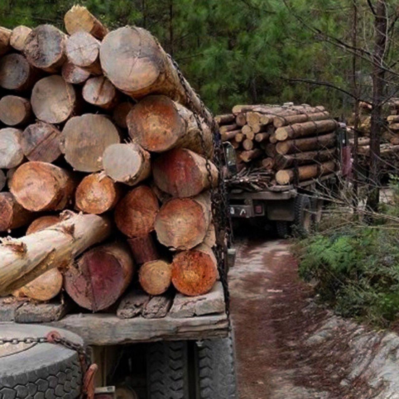 Comunidades hondureñas cierran filas por quema y tala descontrolada de bosques